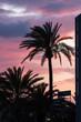 Mediterrane Palmen bei rotgelbem Sonnenuntergang