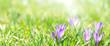 canvas print picture - Banner oder Hintergrund mit Textfreiraum für Frühling, Ostern