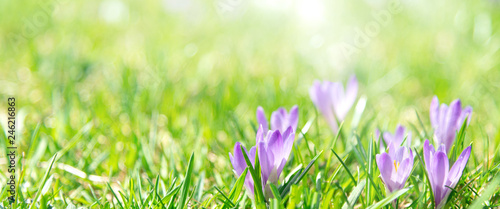 Banner oder Hintergrund mit Textfreiraum für Frühling, Ostern - 246216863
