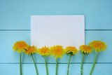 Fototapeta Fototapeta z dmuchawcami - Dandelion flower. Spring Flat lay.Spring to-do list.Yellow dandelion and blank notepad on  blue board background. Spring season © Yuliya
