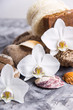 White orchid flowers next to sea stones and shells on a gray background - spa treatments and relaxation concept