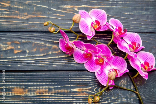 A branch of purple orchids on a brown wooden background  - 246311863