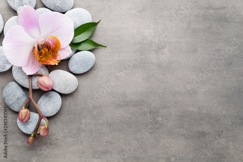 Spa orchid theme objects on grey background. - 246340044