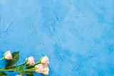 Delicate pink roses. Flower gift concept. Copy space on blue background.