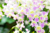Beautiful pale pink orchid flowers in tropical garden - 246348895