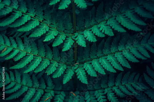 Fern leaves in green forest as background