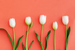 Spring background with white tulips flowers in coral color, top view, flat lay.