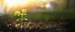 Leinwandbild Motiv Young Plant in Sunlight, Growing plant, Plant seedling
