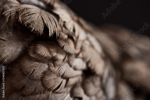 close up texture of brown chicken feathers isolated on black - 246407893