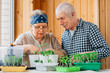 Leinwanddruck Bild - Senior couple caring seedlings. Happy mature man looking at smiling female gardener planting seedlings.