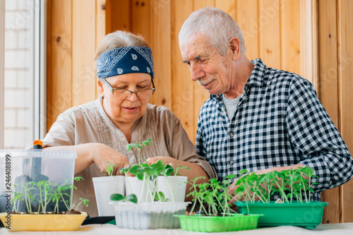 Leinwanddruck Bild Senior couple caring seedlings. Happy mature man looking at smiling female gardener planting seedlings.