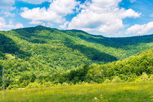 Foto Murales summertime in mountains. beautiful countryside landscape. grassy meadow with yellow herbs. fluffy clouds on the sky.