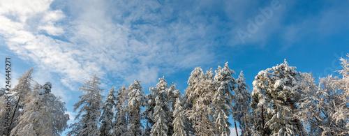 Banner: verschiedene schneebedeckte Baumkronen vor blauem Himmel - 246445271