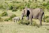 herd of elephants with babies in the wild