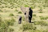 herd of elephants - 246450467