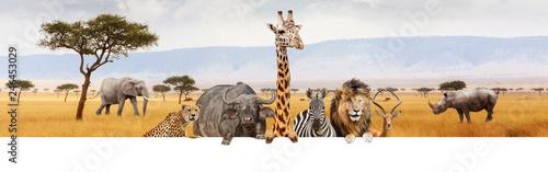 Leinwandbild Motiv Africa Safari Animals Over Web Banner