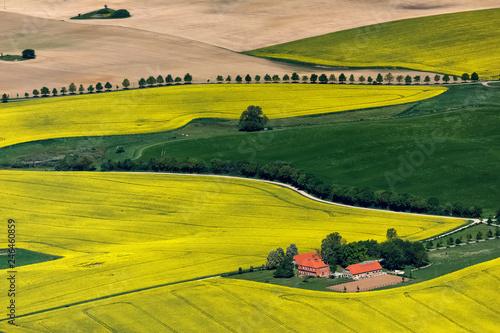 Leinwanddruck Bild Insel Ruegen, Rapsfelder bei Altkamp, Mecklenburg-Vorpommern, Deutschland, Luftaufnahme