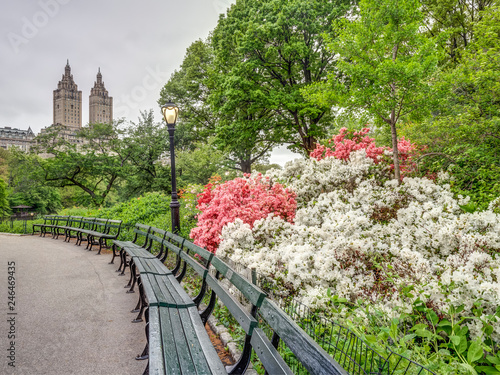 Foto Murales Central Park, New York City in spring