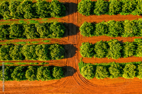 Aerial View Orange Trees Plantation