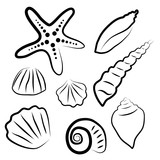 Vector illustration set of miscellaneous sea shells