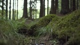 Close-Up shot of green forest ground with plants. - 246582249