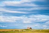 Vaches dans un pâturage, paysage de campagne