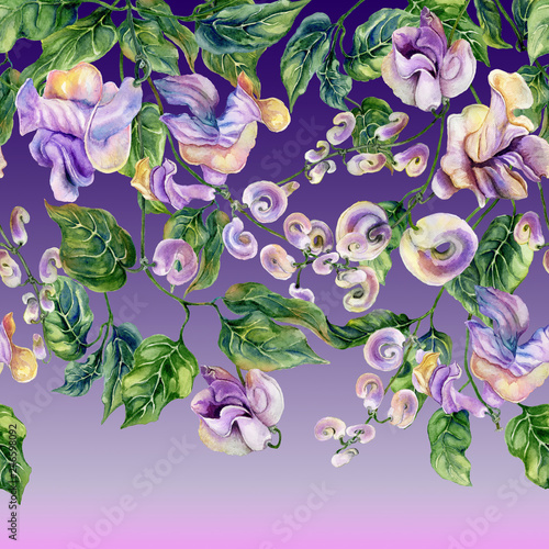 Beautiful snail vine twigs with purple flowers on gradient background. Seamless floral pattern, border. Watercolor painting. Hand drawn botanical illustration. © katiko2016