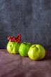 three fruit Quince at doschatom table in red Rowan bunch beam on a blue background 3
