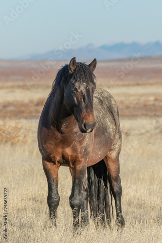 Majestic Wild Horse in Winter - 246635222