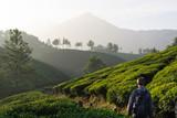 Randonnée dans les plantations de thé de Munnar