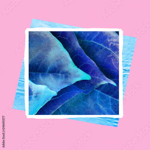 bright colored blue leaves on a contrasting pink background, modern minimal art © aninna