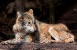 Wildpark Tiere