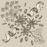 Vector seamless background with hand drawn herbs and spices. Hand drawn ink illustration. Organic and fresh spices illustration - 246648889