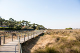 Wooden beach walkway between plants with blue sky and trees in the background - 246649659