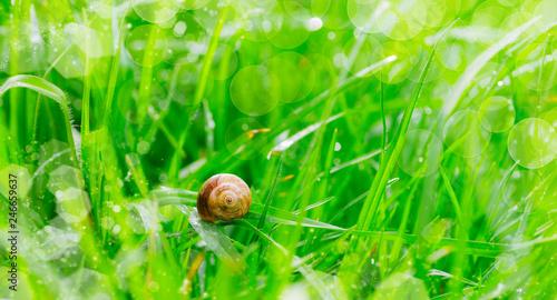 fototapeta na ścianę fondo de una hierba verde y mojada