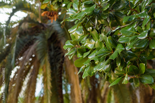 Green vegetation. Palm. Woody tree trunk. The texture of the leaves. Stems and twigs of plants. Palm tree trunk. Botanical Garden.
