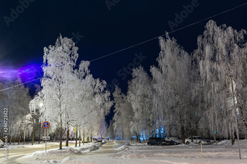 Frost decorated birch with frost. Urban landscape - 246723622