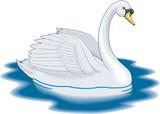 Mute Swan Swimming Vector Illustration