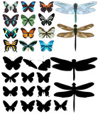 isolated, dragonflies and butterflies, sketch, silhouette in set, collection - 246769264
