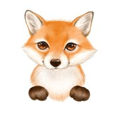Cute cartoon fox isolated on white background