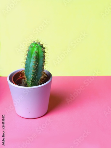 Small Cute Cacti Succulents In Light Pink Pots For Interior Plant