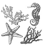 Graphic coral reef with sea horse, sea star, starfish, seaweed, corals, under sea theme, set of elements for marine design, sea collection, hand drawn illustration on white background