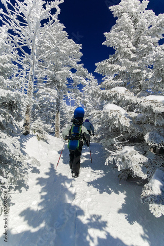 fototapeta na ścianę Snowboarder hiking between snow covered trees to the chin, Stowe, Vermont, USA