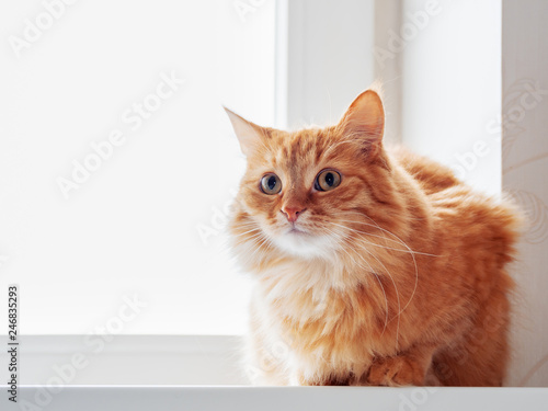 Leinwandbild Motiv Cute ginger cat siting on window sill and waiting for something. Fluffy pet looks curious.