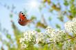 Schmetterling 451