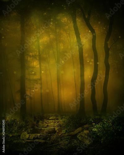 Deep Woods Background - 246933045