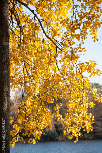 golden autumn - 246933207