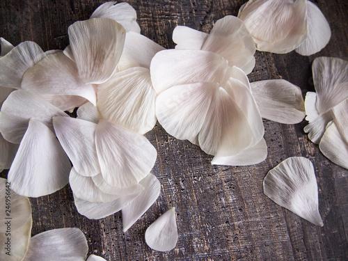 Foto Murales delicate petals of a cut-off Bud of Ranunculus