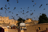 Inde Fort d'Amber