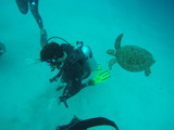 Diving fun in the Philippines - 246991201